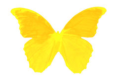 πεταλούδα ευχάριστη Στοκ Εικόνες