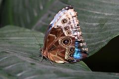 πεταλούδα ζωηρόχρωμη Στοκ εικόνα με δικαίωμα ελεύθερης χρήσης