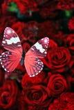 Πεταλούδα και κόκκινα τριαντάφυλλα Στοκ φωτογραφία με δικαίωμα ελεύθερης χρήσης