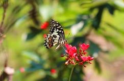 Πεταλούδα και λουλούδι Στοκ εικόνα με δικαίωμα ελεύθερης χρήσης