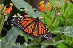 Πεταλούδα και φίλοι. Στοκ φωτογραφίες με δικαίωμα ελεύθερης χρήσης