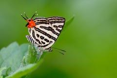 πεταλούδα καλή Στοκ Εικόνες