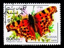 Πεταλούδα κομμάτων (γ-λεύκωμα Polygonia), πεταλούδες serie, circa 19 Στοκ Εικόνα