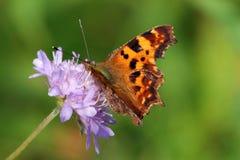 Πεταλούδα κομμάτων Στοκ Εικόνα