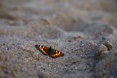 Πεταλούδα με τα ανοικτά φτερά στην κινηματογράφηση σε πρώτο πλάνο άμμου, καλοκαίρι Στοκ Εικόνα