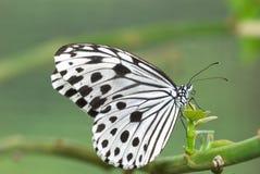 Πεταλούδα με τη φυσική ανασκόπηση στοκ φωτογραφία