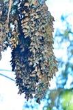 Πεταλούδα μοναρχών μια μακροχρόνια συστάδα στο κρύο Στοκ Εικόνες