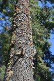 Πεταλούδα μοναρχών στις άγρια περιοχές στοκ φωτογραφίες