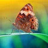 Πεταλούδα μπατίκ από την Ινδονησία στοκ φωτογραφία με δικαίωμα ελεύθερης χρήσης