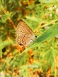 πεταλούδα πολύτιμη Στοκ φωτογραφία με δικαίωμα ελεύθερης χρήσης