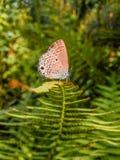 πεταλούδα πολύτιμη Στοκ Φωτογραφίες