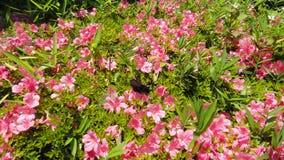 Πεταλούδα που πετά στα όμορφα λουλούδια Στοκ Φωτογραφίες