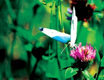 Πεταλούδα που σκαρφαλώνει σε έναν μίσχο Στοκ Εικόνα