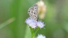 Πεταλούδα στο λουλούδι απόθεμα βίντεο