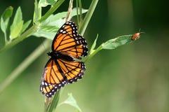 πεταλούδα προγραμματισ&t Στοκ φωτογραφία με δικαίωμα ελεύθερης χρήσης