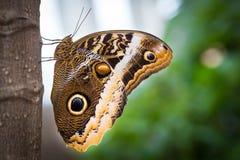 Πεταλούδα σε έναν κλάδο Στοκ Εικόνες