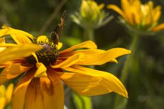 Πεταλούδα σε ένα όμορφο λουλούδι στοκ εικόνες με δικαίωμα ελεύθερης χρήσης