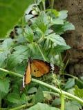 Πεταλούδα σε πράσινο στοκ φωτογραφία