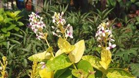 Πεταλούδα στα μικρά άσπρα λουλούδια κοντά στο τετράγωνο πόλεων του Surabaya απόθεμα βίντεο