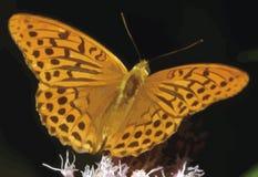 Πεταλούδα στην άνοιξη που χρωματίζεται με τα μεγάλα φτερά, επεξηγηματικό σχέδιο διανυσματική απεικόνιση