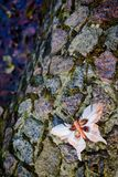 Πεταλούδα στις πέτρες Στοκ Φωτογραφίες