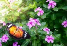 Πεταλούδα στον κήπο λουλουδιών κατά τη διάρκεια του καλοκαιριού στο πάρκο πεταλούδων Στοκ Φωτογραφία