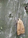 Πεταλούδα στον κήπο μου Στοκ φωτογραφία με δικαίωμα ελεύθερης χρήσης