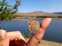 Πεταλούδα στο δάχτυλο Στοκ φωτογραφίες με δικαίωμα ελεύθερης χρήσης