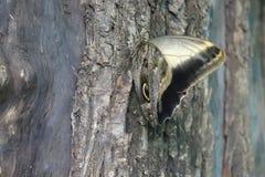 Πεταλούδα στο δέντρο στοκ φωτογραφία με δικαίωμα ελεύθερης χρήσης