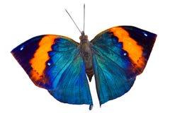 Πεταλούδα στο λευκό στοκ εικόνες με δικαίωμα ελεύθερης χρήσης
