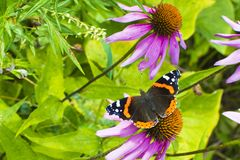 Πεταλούδα στο λουλούδι Έννοια: εγκαταστάσεις κήπων, φύση στοκ φωτογραφία με δικαίωμα ελεύθερης χρήσης