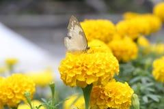 Πεταλούδα στο λουλούδι Μια ζωηρόχρωμη εικόνα στοκ εικόνα με δικαίωμα ελεύθερης χρήσης