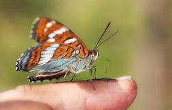 Πεταλούδα στο πρώτο πλάνο στοκ εικόνες με δικαίωμα ελεύθερης χρήσης