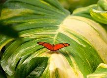 Πεταλούδα στο υγρό φύλλο Στοκ εικόνα με δικαίωμα ελεύθερης χρήσης