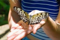 Πεταλούδα στο φοίνικα Στοκ Εικόνες