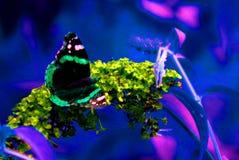 πεταλούδα τέχνης Στοκ φωτογραφία με δικαίωμα ελεύθερης χρήσης