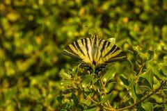 Πεταλούδα το /turkey-antalya στοκ εικόνες με δικαίωμα ελεύθερης χρήσης
