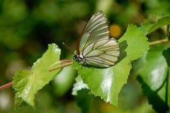 Πεταλούδα Φωτεινή και όμορφη στιγμή στοκ εικόνα