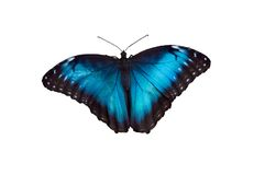 πεταλούδα 18 Στοκ Φωτογραφίες