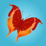 πεταλούδα 2 Στοκ Φωτογραφίες