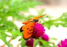 πεταλούδα 4 στοκ φωτογραφίες
