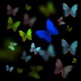 Πεταλούδα Colage Στοκ Εικόνα