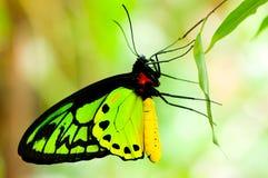 πεταλούδα colorfull Στοκ φωτογραφία με δικαίωμα ελεύθερης χρήσης