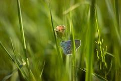 πεταλούδες δύο Στοκ Εικόνες