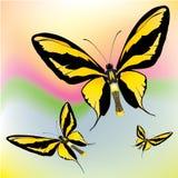 πεταλούδες εξωτικές Στοκ φωτογραφία με δικαίωμα ελεύθερης χρήσης