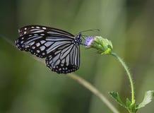 Πεταλούδες με τα σχέδια Στοκ Εικόνες