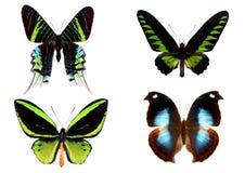 πεταλούδες που απομονώ& στοκ εικόνα με δικαίωμα ελεύθερης χρήσης