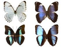 πεταλούδες που απομονώ& στοκ εικόνες με δικαίωμα ελεύθερης χρήσης