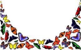 πεταλούδες που τίθεντα& Απεικόνιση αποθεμάτων