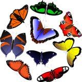πεταλούδες που τίθεντα& διανυσματική απεικόνιση